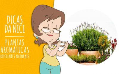 9 Plantas Aromáticas que atuam como Repelentes Naturais