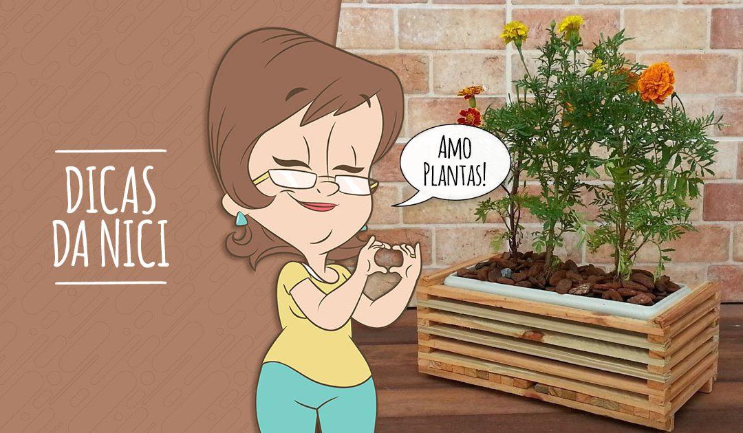 Como aderir às floreiras nos ambientes