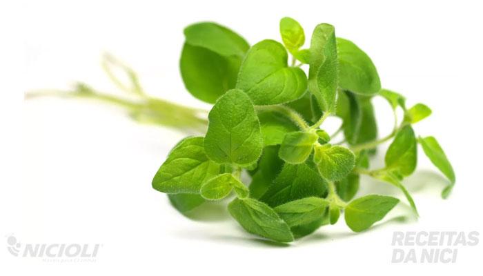 6 temperos essenciais para cultivar e usar fresquinho